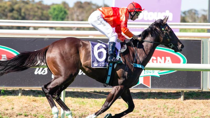 MISTY METAL SURGES TO COMFORTABLE VICTORY IN JUNGLE MIST CLASSIC