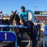 Amuleto Wins At His First Start