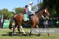 Kyneton Cup victory for Dodging Bullets