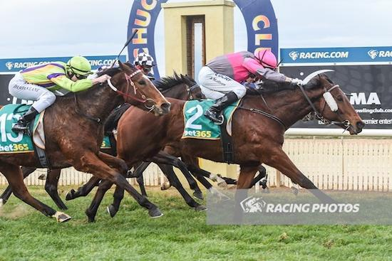 Last bound victory at Echuca for Along Came Jones