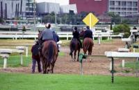 Training Facilities at Caulfield racecourse.JPG