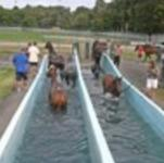 swimming pool at Caulfield.JPG