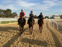 horses on the polytrack.JPG