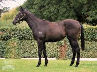 Race this exciting filly by Champion sire DALAKHANI
