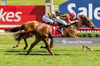 Safariann returns to winning form