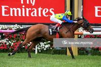 Flemington win by Domino Vitale makes a great start to 2017