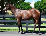 AVAILABLE quality yearling personally selected by Colin