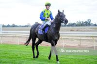 Lodestar heads to Echuca for his maiden win