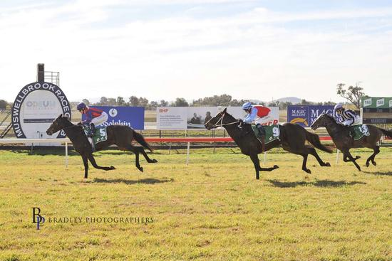 Myboycolly impresses first up at Muswellbrook