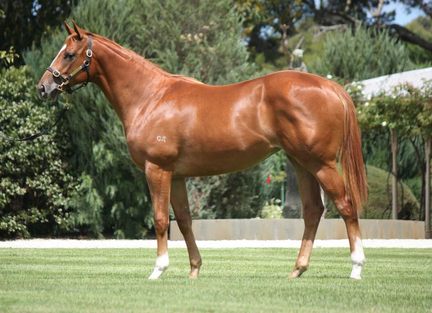 Purchase at 2018 Inglis Classic Yearling Sale