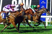 Toledo - MVRC Australia Stakes.jpg