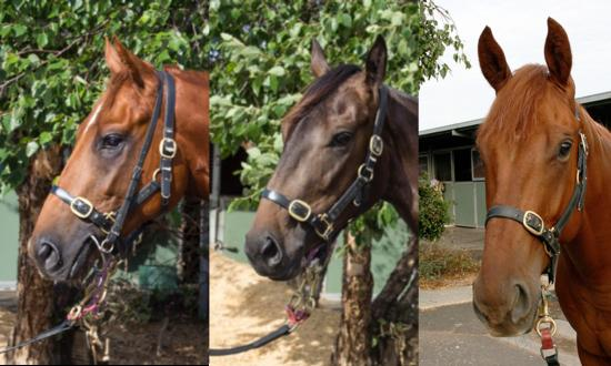 Don't let these three 2yo's slip by without inspection