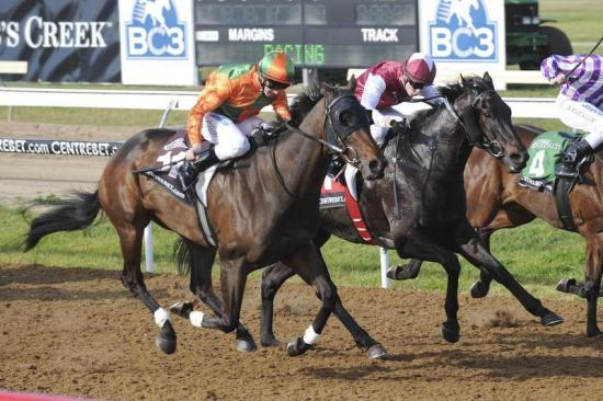 Novaspirit charges home on Geelong Synthetic track again