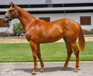 LOT 742 WRITTEN TYCOON / STRATA TITLE  FILLY