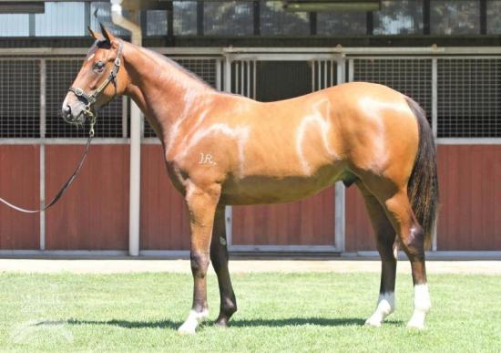 LOT 26 NORTHERN METEOR / LILY ISABELLA  COLT