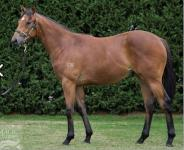 Gorgeous filly joins our team