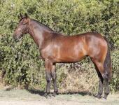 Sandown Sunday and big mare value