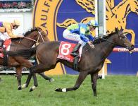 Ocean Embers Wins Well at Caulfield
