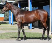 Limited Shares Remaining Stryker x Actrice Colt