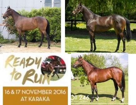 NEW ZEALAND READY TO RUN HORSES ARRIVE AT STABLE