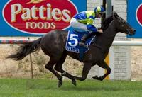 Scotopia Lights Up The Track At Bairnsdale