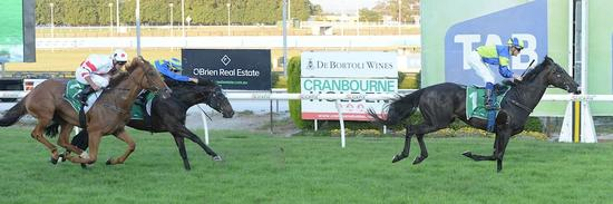 Happy New Year For Scotopia Who Wins Well at Cranbourne