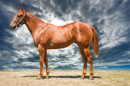 SUCCESS AT THE YEARLING SALES SEVEN NEW HORSES