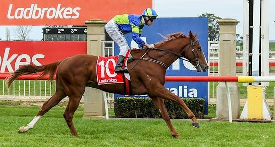 Star Major Shines Brightly at Sale