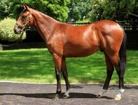 Rip Van Winkle x Go South Shares Selling Fast