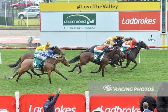 Bright Eyes Lights Up Moonee Valley