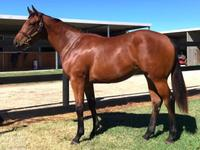 Dawn Approach Filly All Quality