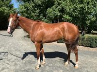 Nicks That Click - Promising Written Tycoon Filly Ready To Go