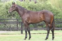 Red Arrow Yearling Purchased