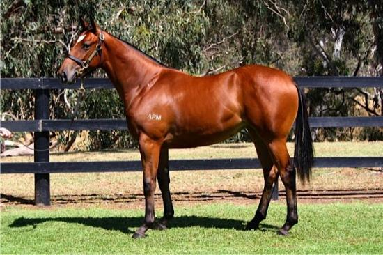 SHARES AVAILABLE by the exciting stallion Duke of Marmalade