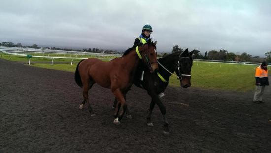 New Lead Pony Working Wonders
