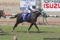 Green Hornet Wins His Maiden Against The Older Horses
