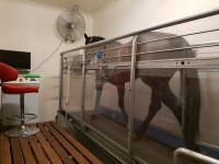 Horse Treadmill Up And Running