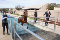 EQUINE POOL GRAND OPENING