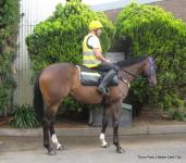 FEATURED HORSE FOR SALE: THORN PARK x NEVER CENT FILLY