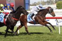 FALCENT SECOND BY A NOSE AT CAULFIELD