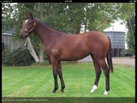 New Melbourne Yearling Purchase