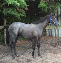 RELIABLE MAN FILLY HAS ARRIVED