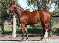VOBIS GOLD INGLIS SALE PURCHASES