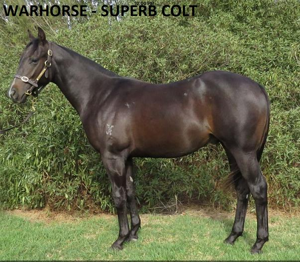 2019 VOBIS GOLD INGLIS SALE PURCHASE