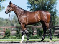 MELBOURNE PREMIER YEARLING PURCHASES