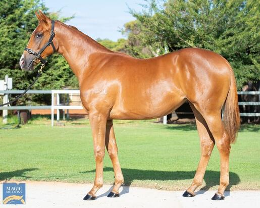 Safeguard- Unruffled  YEARLING FILLY