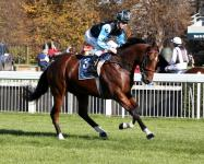SON OF MAHER ON HIS WINNING WAY