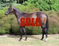 RACE THIS WELL RELATED FILLY WITH US!
