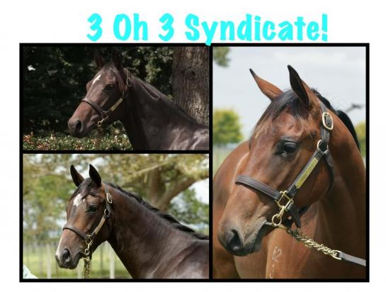 2 OH 2 Fillies Syndicate