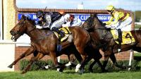 Dales mare strikes again | Daily Advertiser